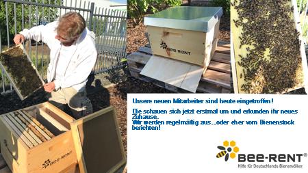 Bienenstock auf dem Firmengelände
